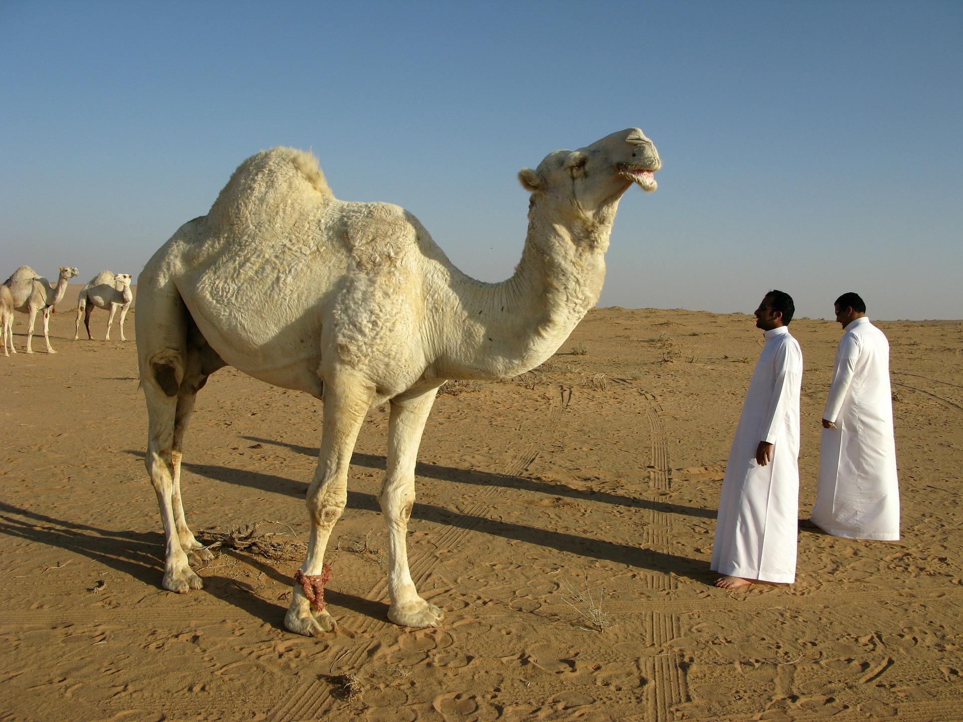saudi-arabia-95500_1920